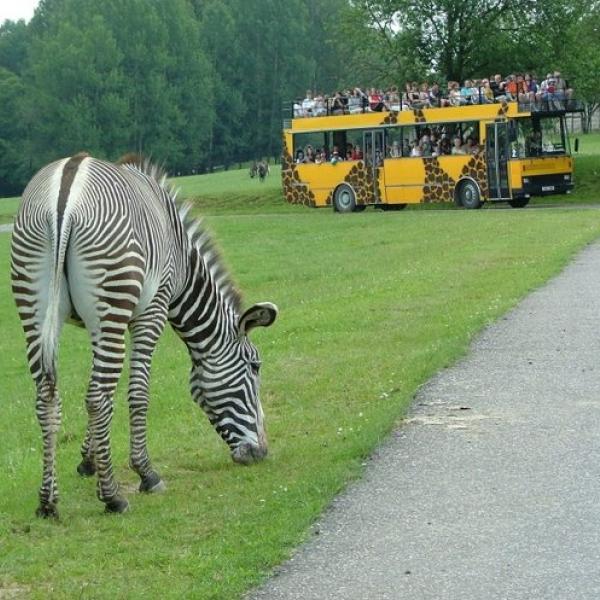 ZOO Dvůr Králové - Safari