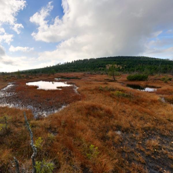 Rašeliniště na Čihadle