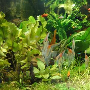 Veřejné akvárium v České Lípě, autor: Veřejné akvárium Česká Lípa (Petr Jasanský)  - FB archiv