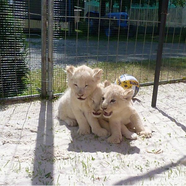Zoopark Doksy, autor: Ludvík Berousek - www.zvirataprofilm.cz