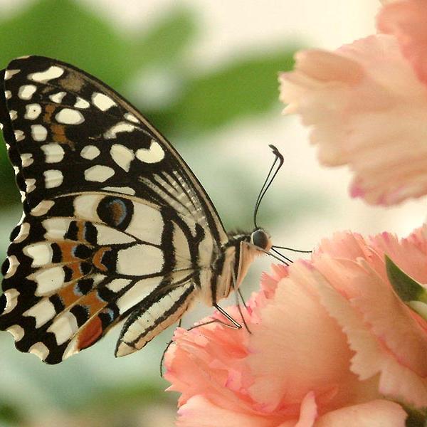 Motýlí dům v Jonsdorfu, autor: Archiv - Motýlí dům Jonsdorf