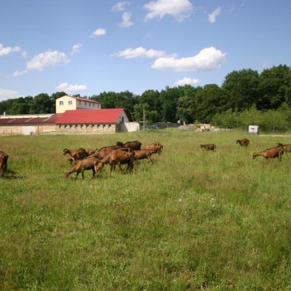 Kozí farma Nový Dvůr, autor: Krejzovi