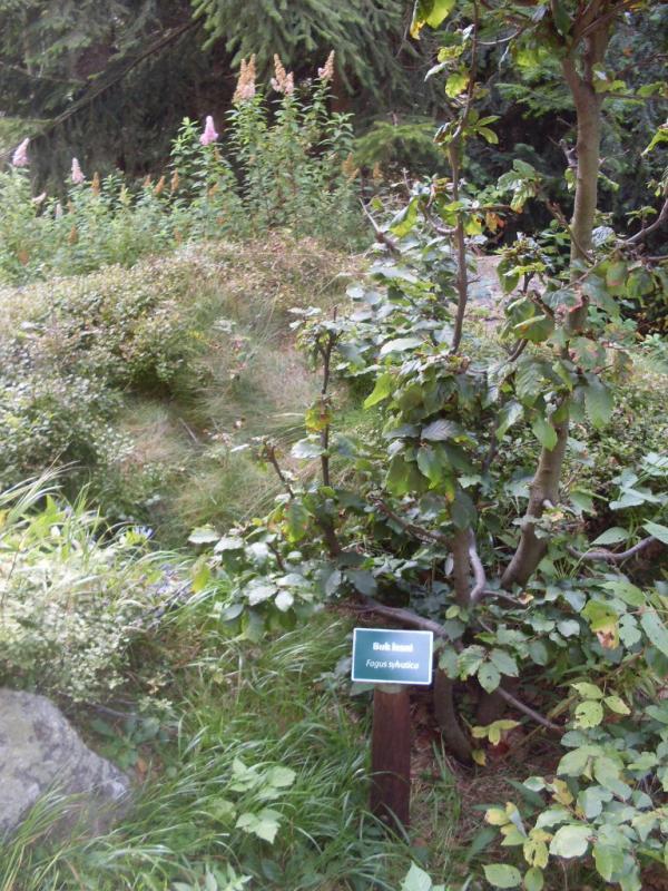 Arboretum Černá studnice