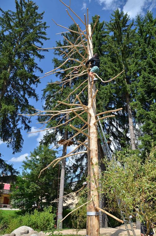 Harrachovský strom Botovník