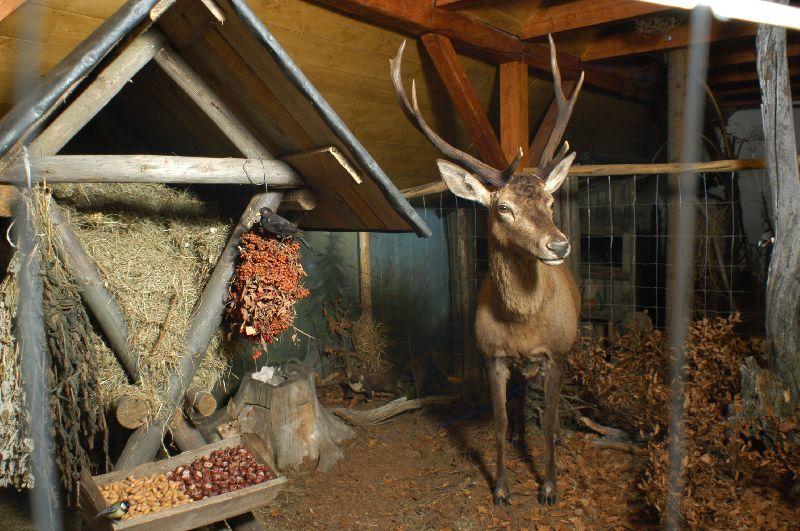 Krkonošské muzeum - expozice Šindelka